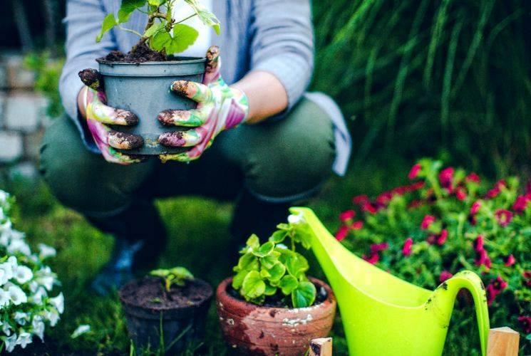 Удобрение для роста растений