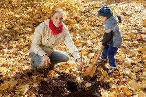 Сроки осенней посадки плодовых деревьев