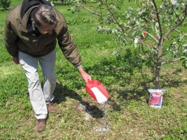 Когда сажают деревья весной или осенью
