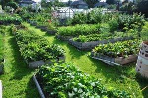 Разумное земледелие советы начинающим садоводам и огородникам