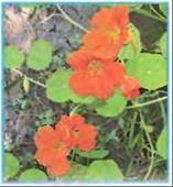 Растения клумбы рисунок 1 класс нарисовать