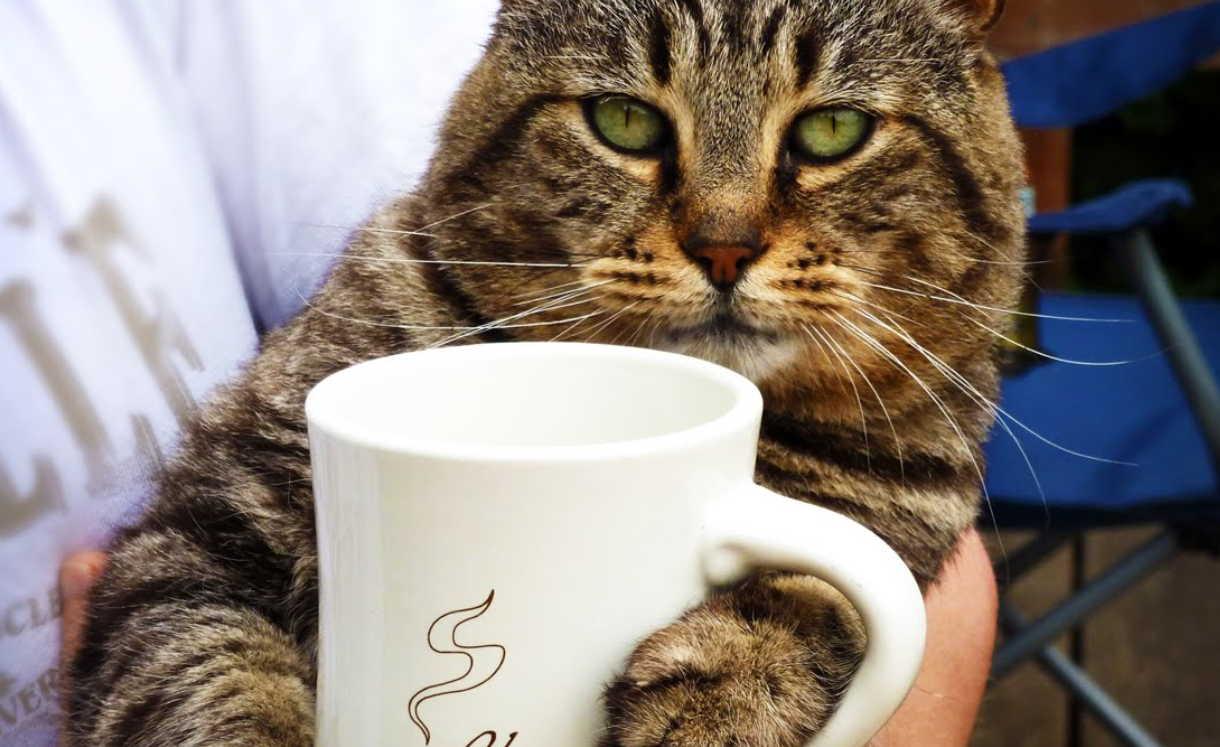 Спитой кофе применение