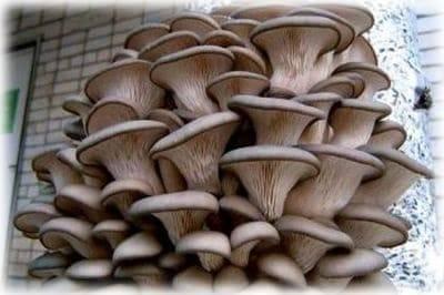Разные грибы