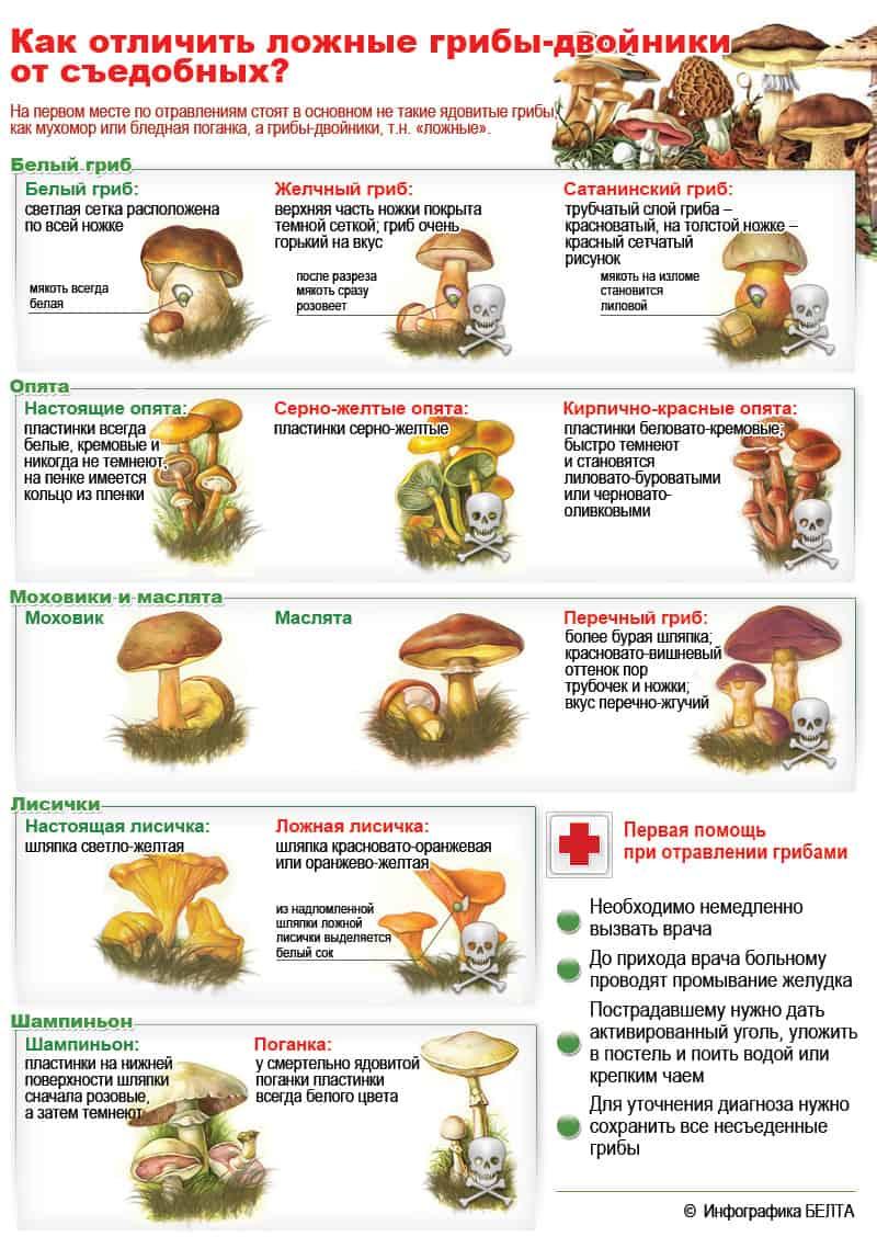 Шляпочные грибы съедобные и ядовитые