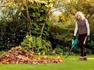 Убирать ли листву осенью на даче
