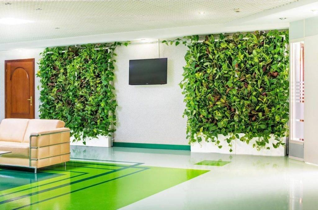 Зелень на стене