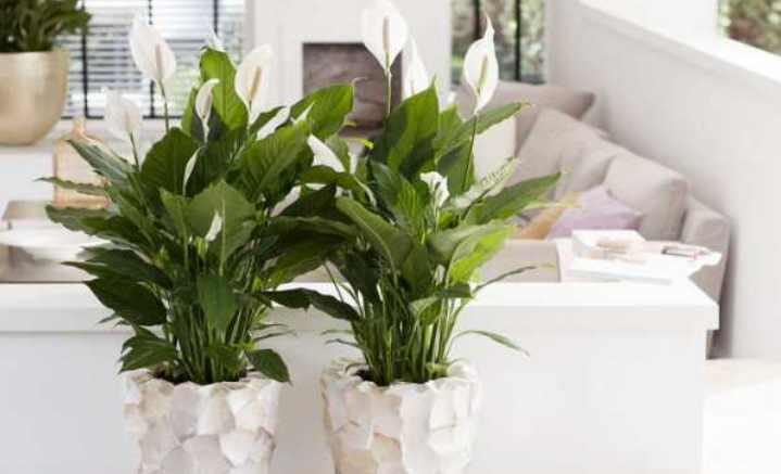 Какие комнатные растения должны быть в доме