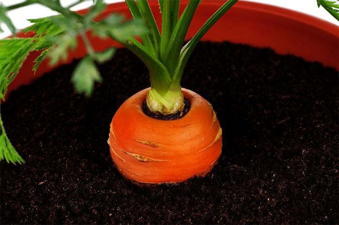 Какую зелень можно выращивать на подоконнике