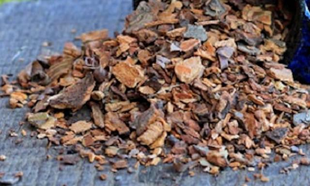 Ветки вишни лечебные свойства