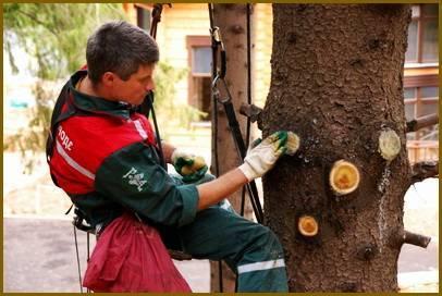 Санітарна обрізка дерев