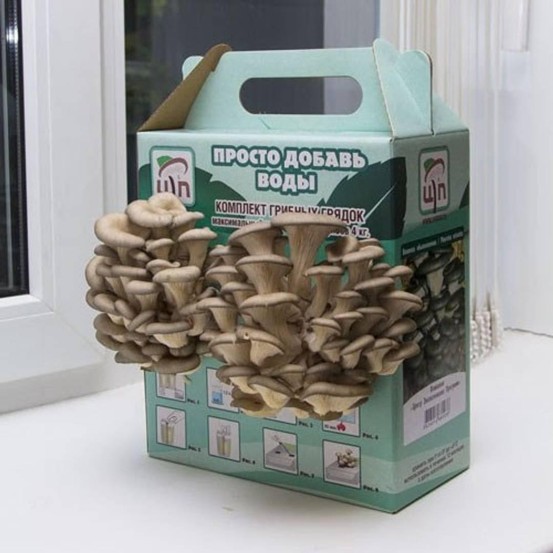 Как посадить грибы вешенки в домашних условиях