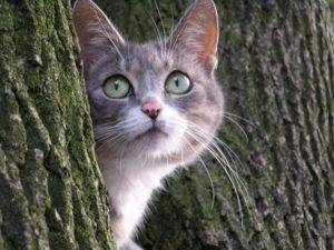 Как отпугнуть кошек с участка