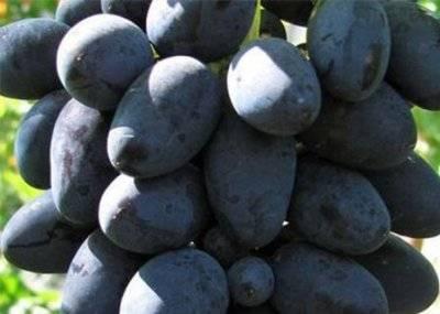 Виноград вдохновение