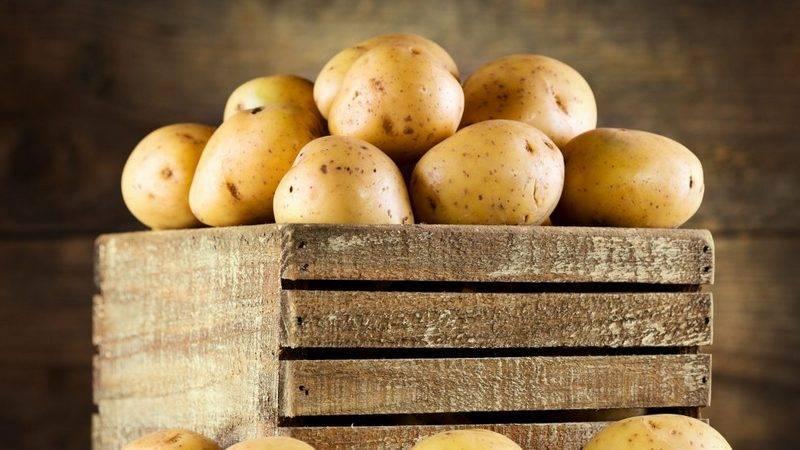 Как сохранить картошку в погребе от гниения