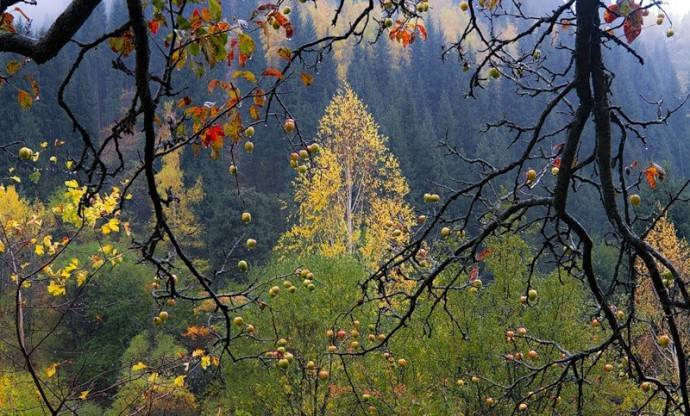 Яблоневое дерево