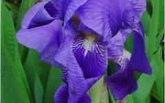 Луковицы тюльпанов покрылись плесенью что делать
