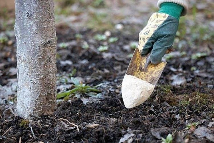 Чем подкармливать деревья и кустарники осенью