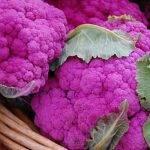 Урожайность цветной капусты с 1 га