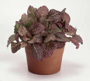 Домашние растения которые любят тень
