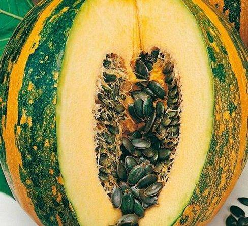 Выращивание тыквы на семена