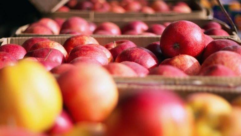 При какой температуре хранить яблоки