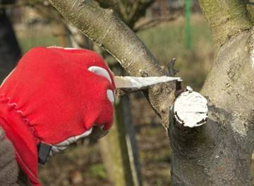 Омолаживающая обрезка яблонь осенью