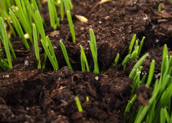 Подкисление почвы