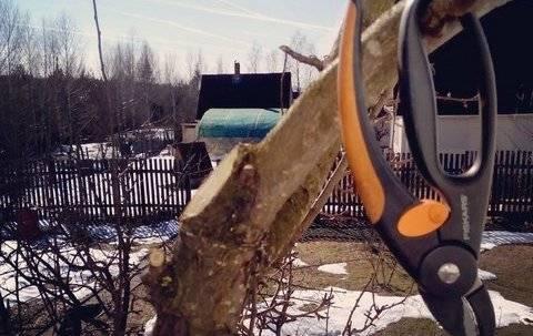 Когда нужно обрезать плодовые деревья