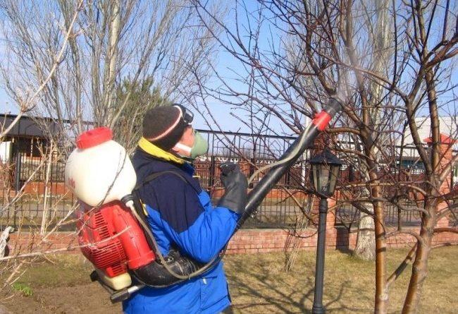 Обработка кустарников осенью от вредителей и болезней