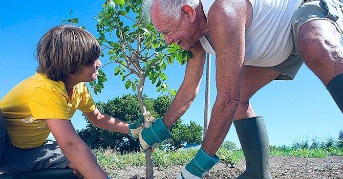 Как правильно привить дерево