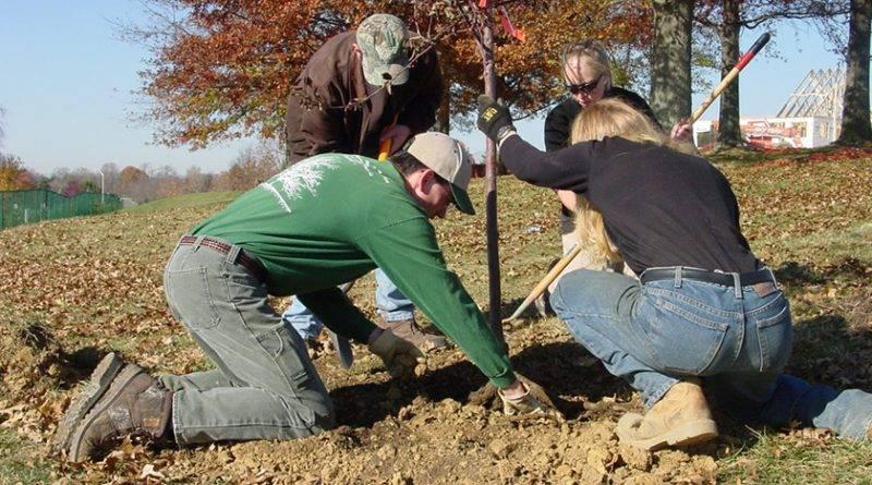 Посадка деревьев в октябре