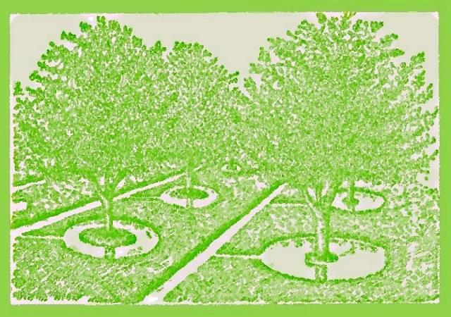 Надо ли поливать деревья осенью