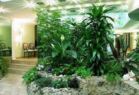 Растения для зимнего сада фото