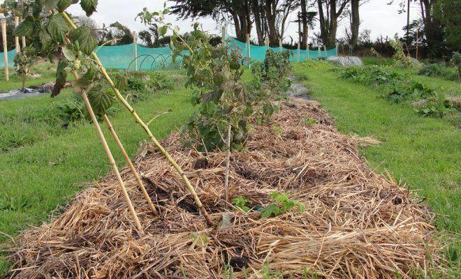 Обработка земли от фитофторы