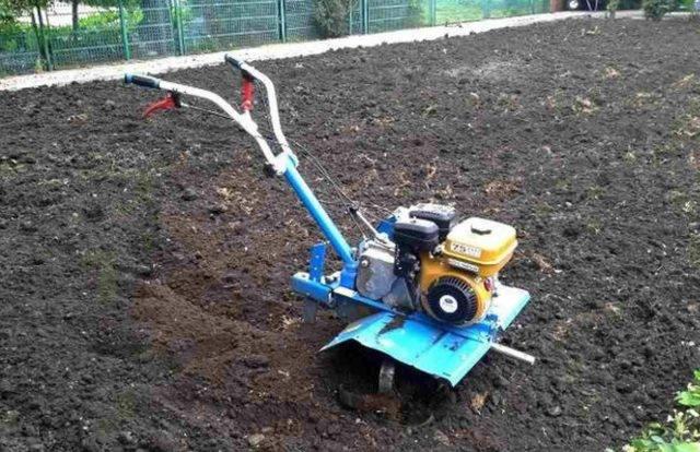 Как уничтожить проволочника в огороде