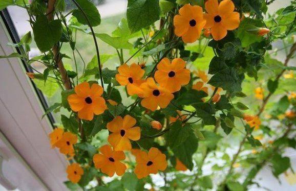 Свисающие растения для дома