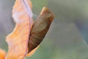 Как насекомые готовятся к зиме