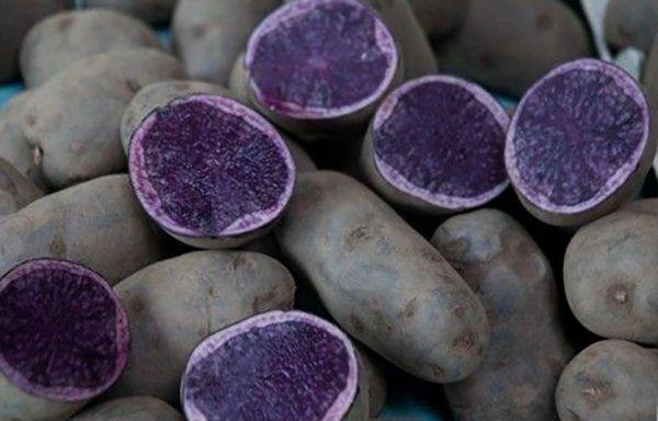 Синяя картошка польза