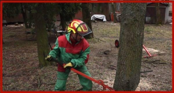 Как правильно свалить дерево в нужном направлении