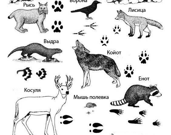Следы животных фото с надписями