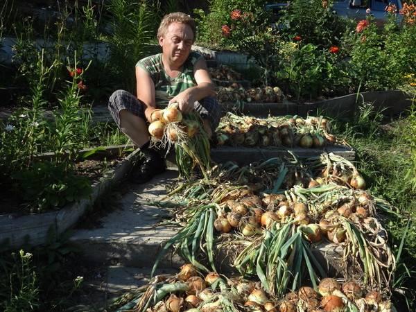 Узкие грядки органическое земледелие