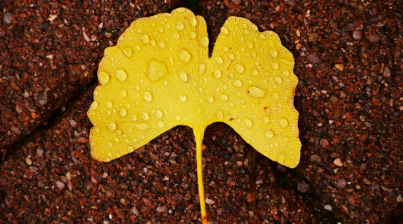 Бледно желтые листья