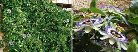 Растения для зимнего сада список