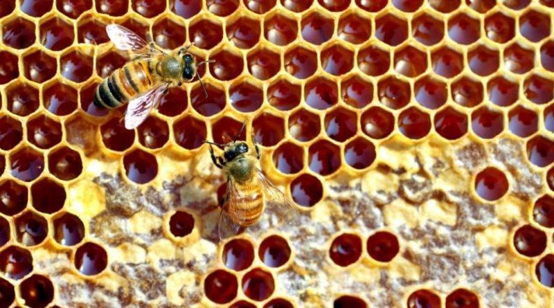Что любит пчела