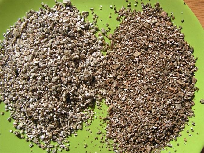 Нужно ли выкапывать георгины на зиму
