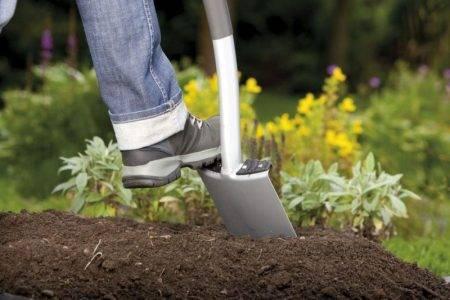 Как бороться с сорняками на дачном участке