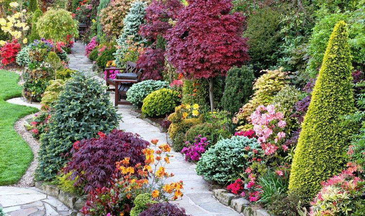 Сообщение о декоративных растениях