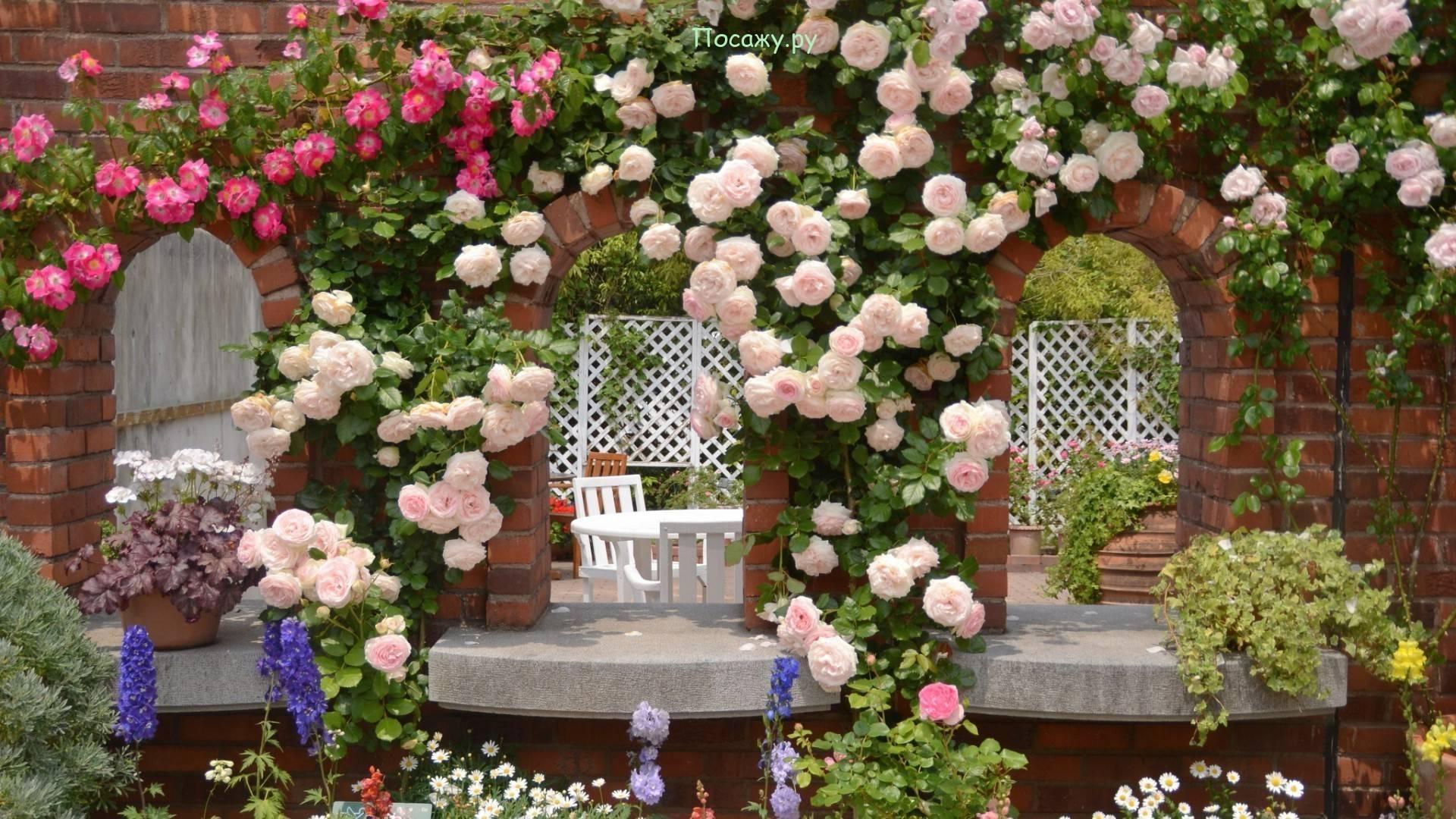 Как правильно укрыть розы на зиму фото