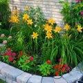 Растения для ландшафтного дизайна фото и названия