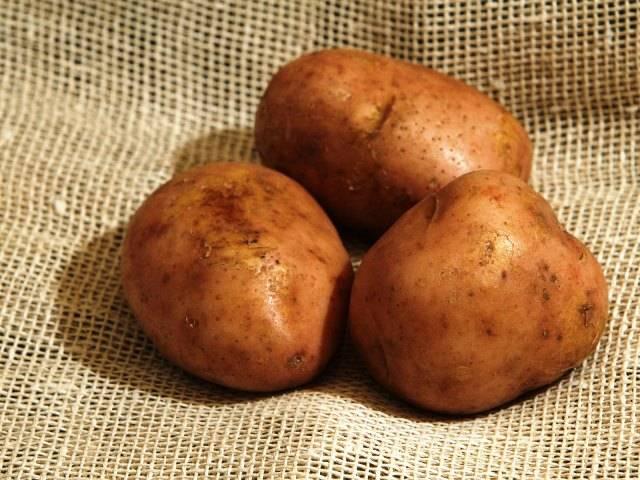 Картошка фотографии